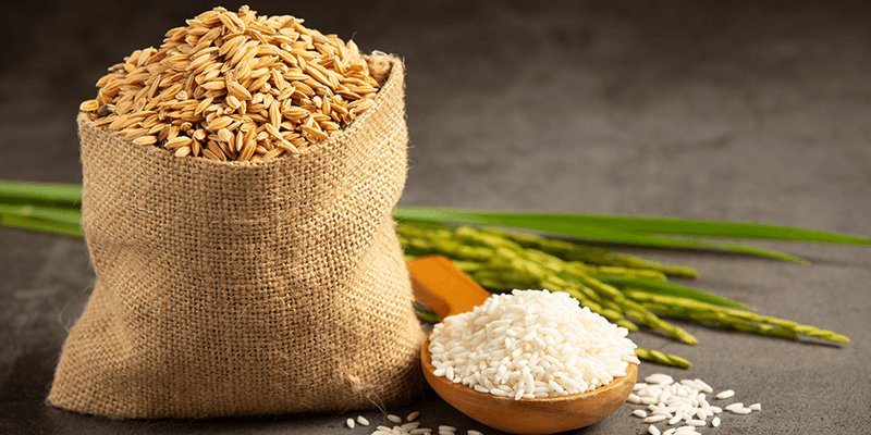 Processed Grains and Carbohydrates
